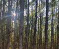 altivo-floresta-003