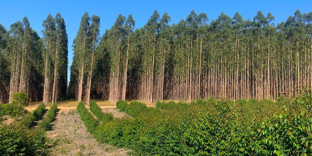 altivo-floresta-001